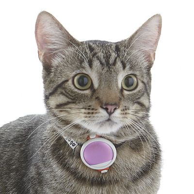 Pet Kit Activity Tracker