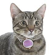 Pet Kit Activity Tracker