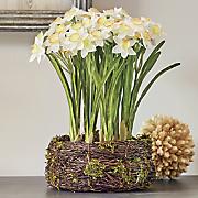 Nesting Daffodils