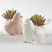 Bird Succulent