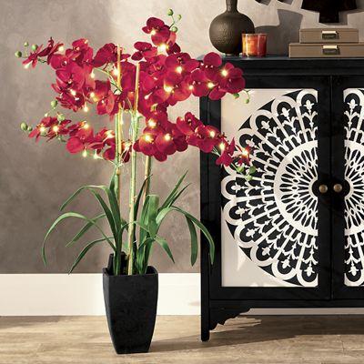 "36"" Lighted Phalaenopsis Orchid"